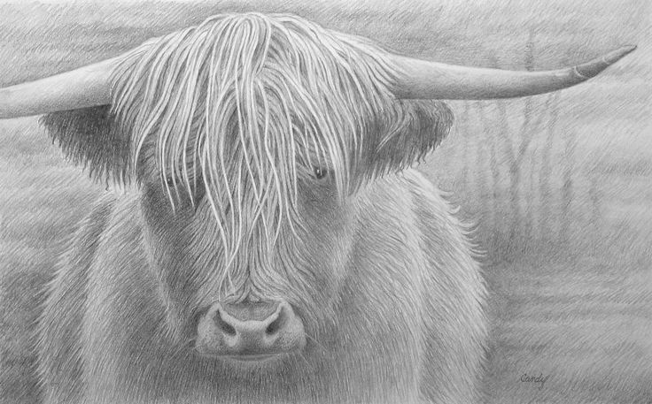 how to draw a realistic cow realistic cow drawing images pictures becuo cow drawing how a to draw cow realistic