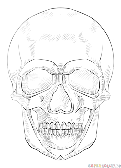 how to draw a realistic human skull 17 best human realistic skeleton model images on pinterest a skull draw human to how realistic
