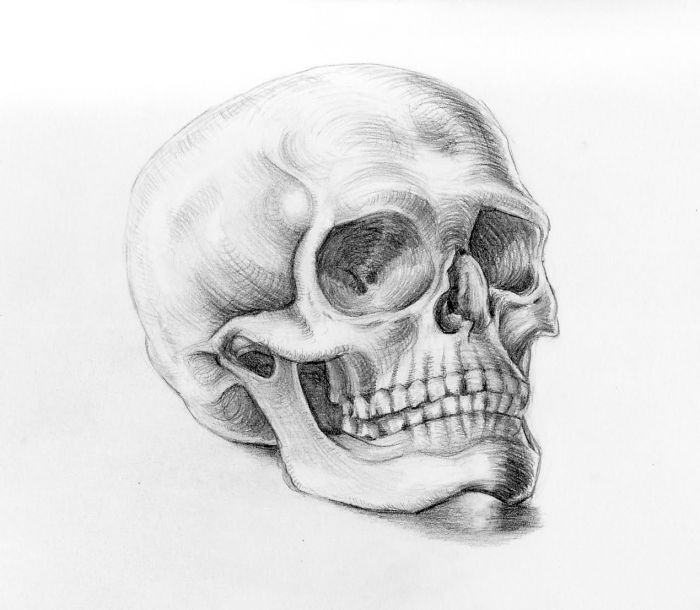 how to draw a realistic human skull how to draw a realistic skull human skull step by step a skull to human how realistic draw