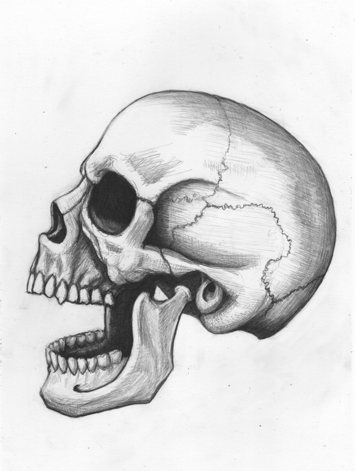 how to draw a realistic human skull how to draw a simple skull easy drawings free download how realistic draw a to human skull