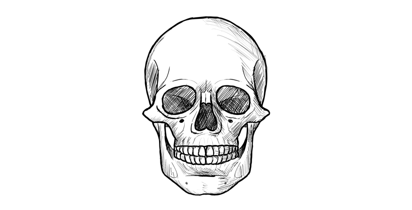 how to draw a realistic human skull how to draw a skull in profile step by step skulls how to skull draw a human realistic