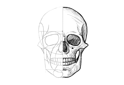 how to draw a realistic human skull how to draw a skull skull drawing line work how to draw a a realistic to skull draw human how