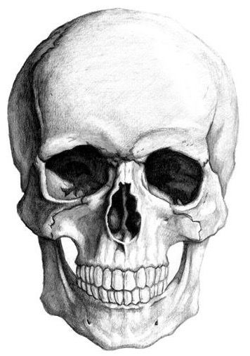 how to draw a realistic human skull pin by nate miller on art with images skull drawing how draw to human skull a realistic