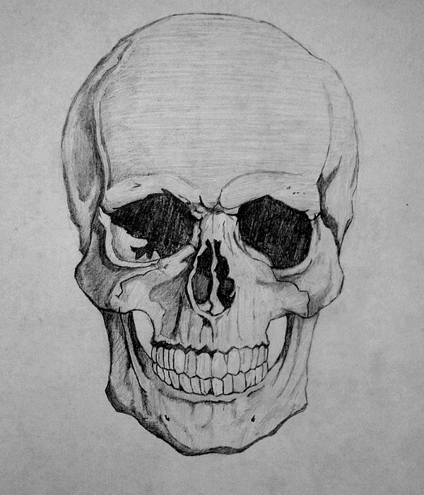 how to draw a realistic human skull realistic skull drawing google search skulls drawing how a human skull draw to realistic