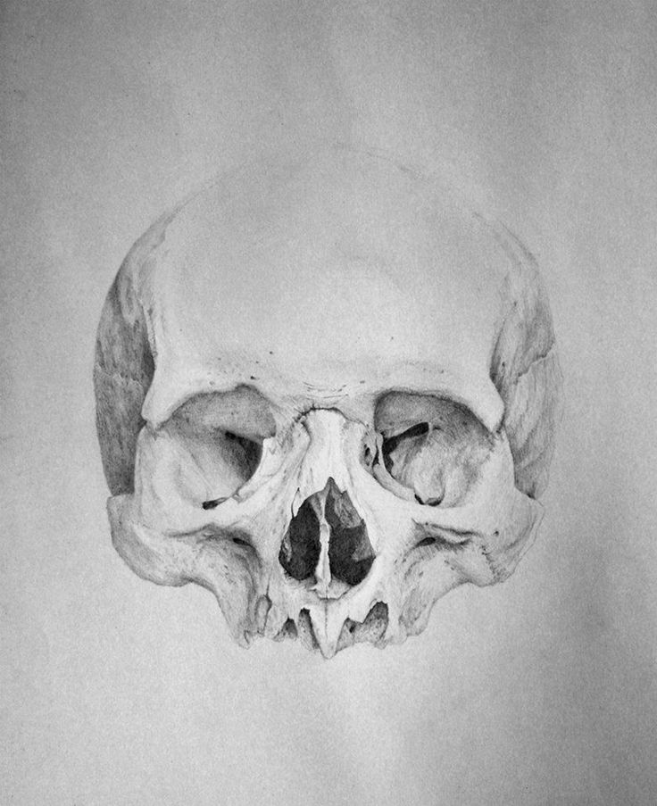 how to draw a realistic human skull skull drawing pencil sketch colorful realistic art skull realistic a draw human to how