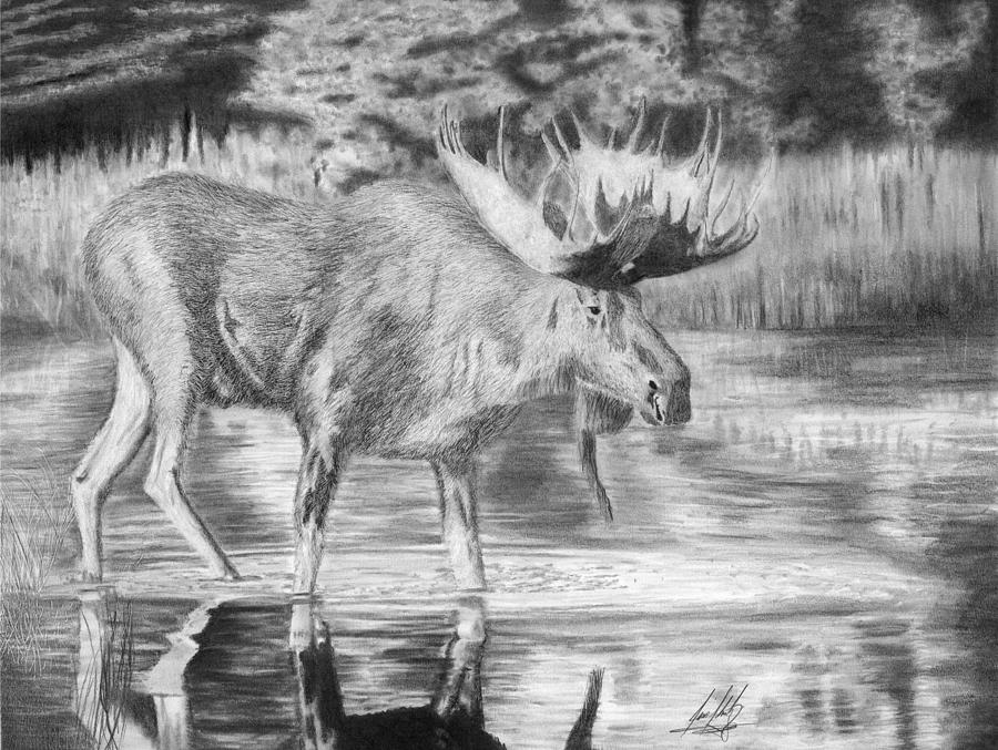 how to draw a realistic moose forget real hunting trophies 10 wall trophies for animal how a moose draw to realistic