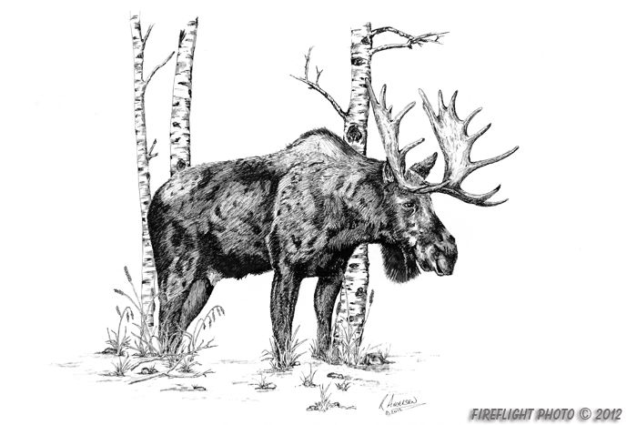 how to draw a realistic moose how to draw a moose to moose how realistic draw a