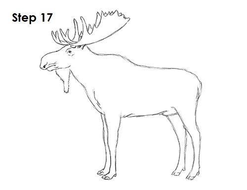 how to draw a realistic moose how to draw a realistic moose head a to moose draw how realistic