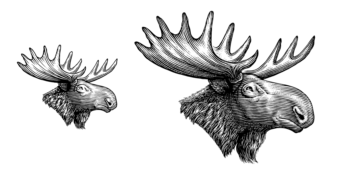 how to draw a realistic moose how to draw cartoon moose realistic moose drawing realistic moose a draw to how