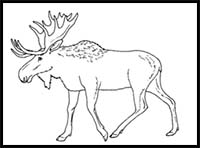 how to draw a realistic moose moose drawing pencil sketch colorful realistic art a to how realistic moose draw