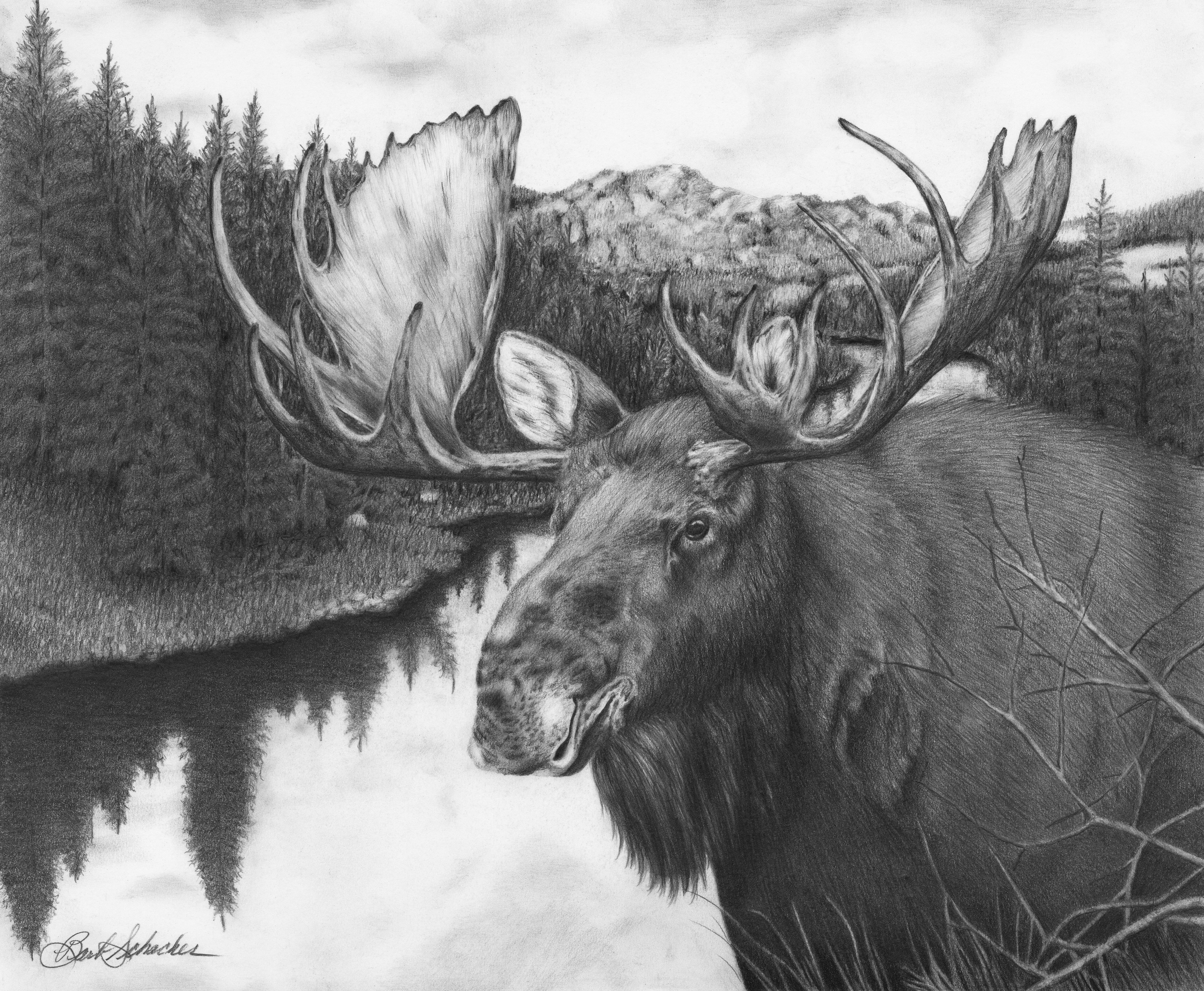 how to draw a realistic moose moose drawing pencil sketch colorful realistic art to a draw moose how realistic