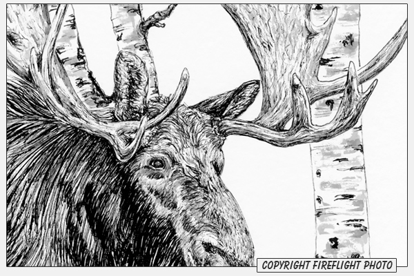 how to draw a realistic moose moose drawings sketching vector a realistic to draw how moose