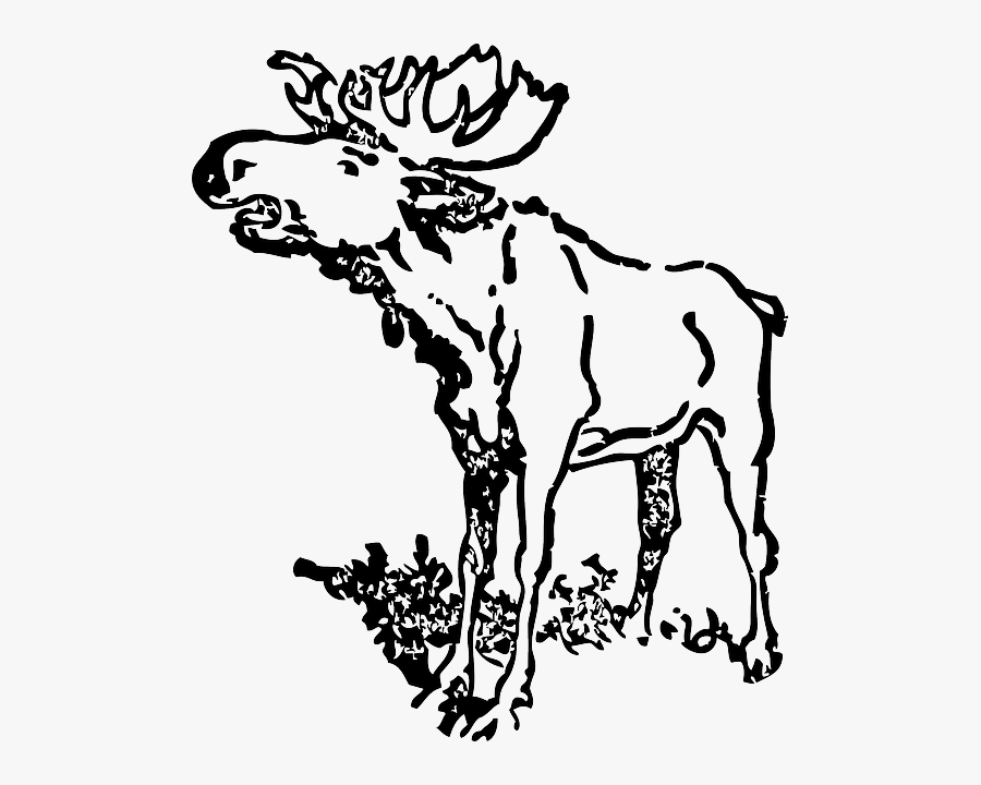 how to draw a realistic moose moose moose defending his territory coloring page moose to how realistic a draw