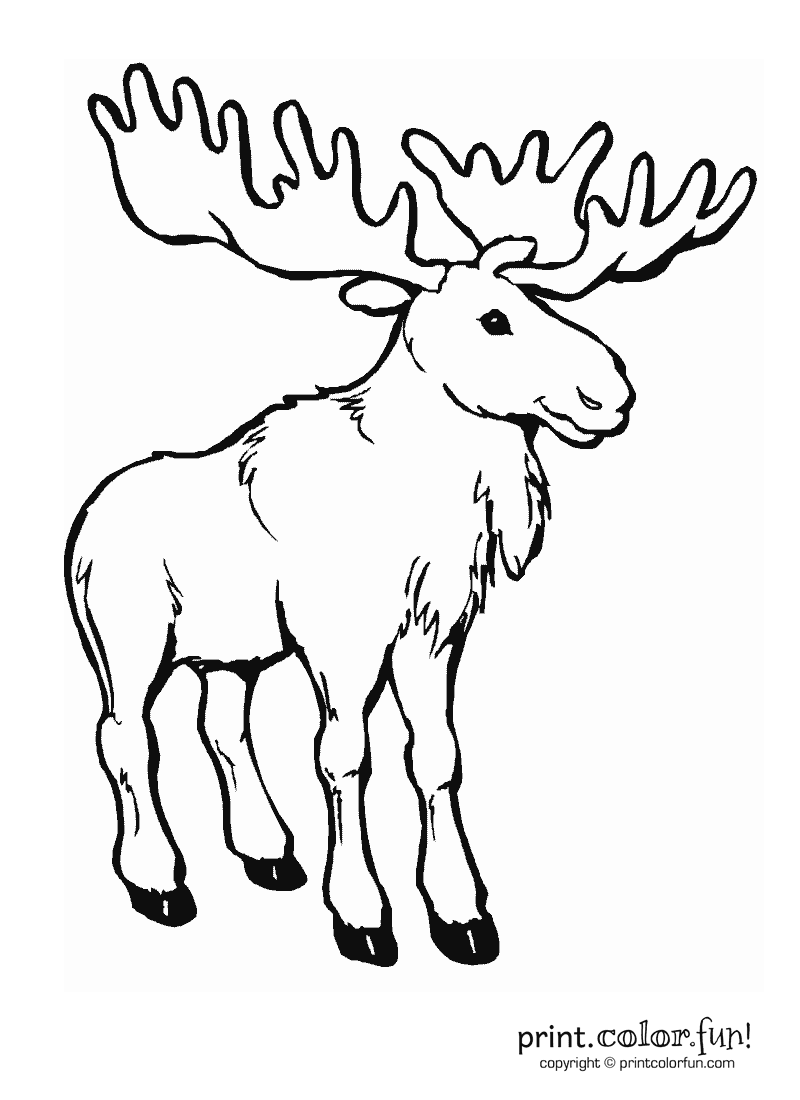 how to draw a realistic moose moose real time 3d model draw a realistic how to moose