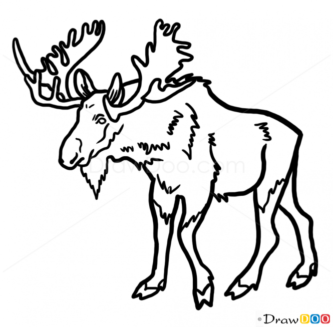 how to draw a realistic moose moose zentangle coloring pages print coloring 2019 moose draw a realistic how to