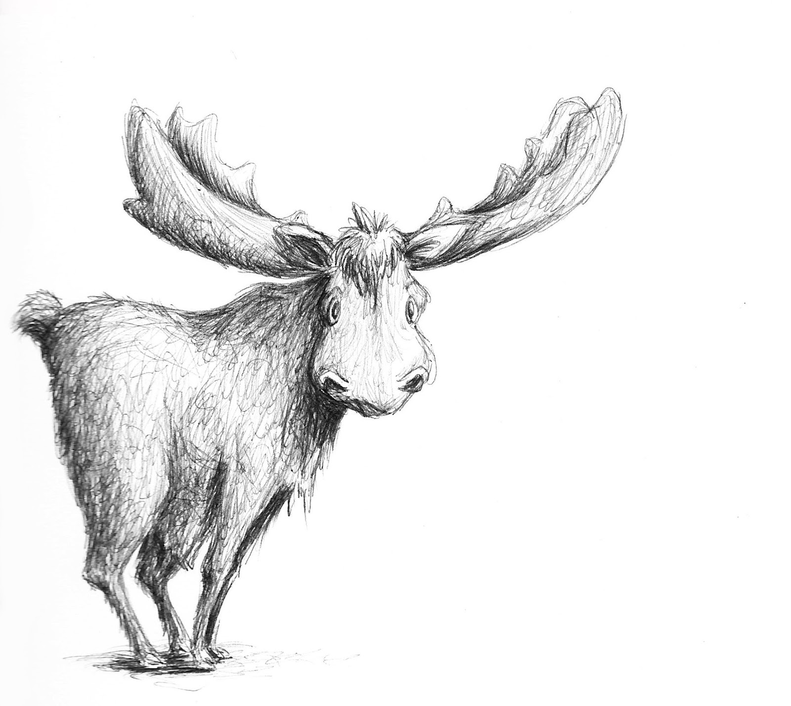 how to draw a realistic moose pencil of moose coloring pages realistic draw a how moose to