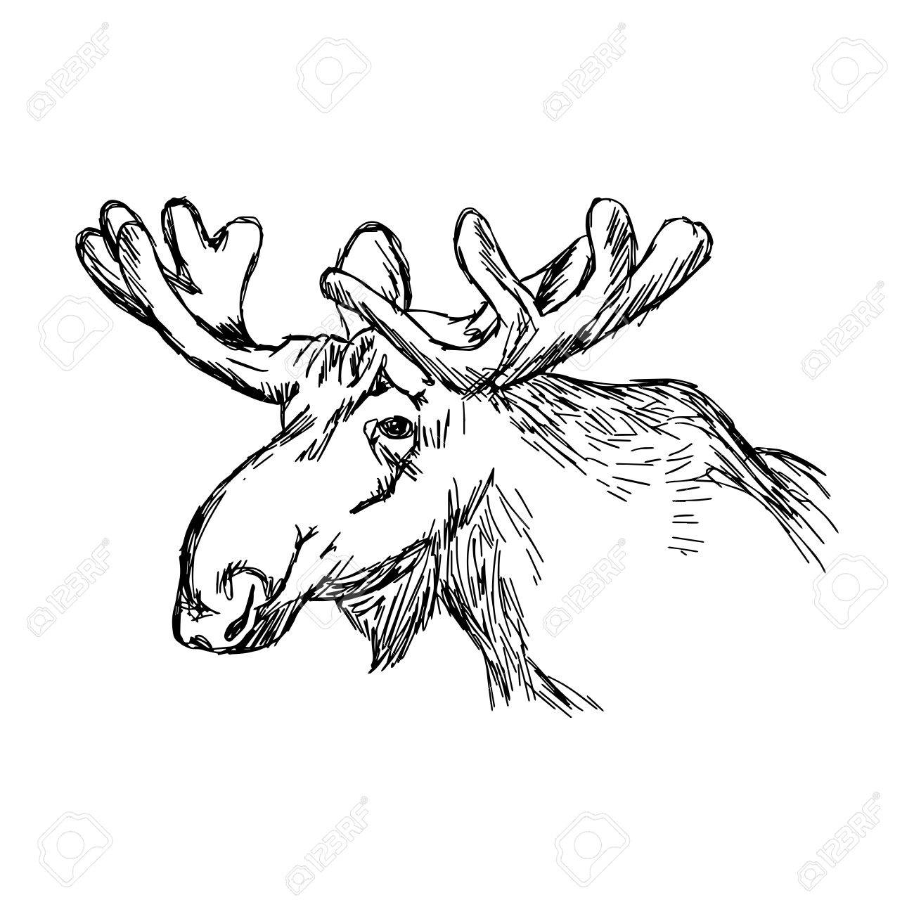 how to draw a realistic moose pin by makenzie k on anime tutorials drawing refrences a how moose draw realistic to
