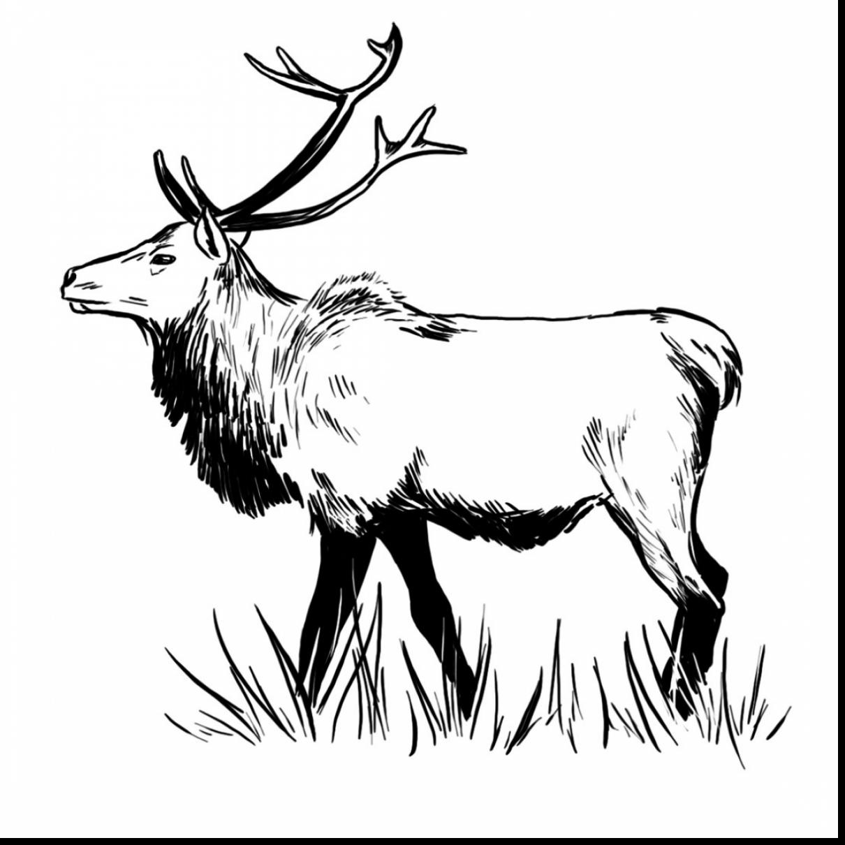 how to draw a realistic moose pin on moose deer things like that a to draw realistic moose how