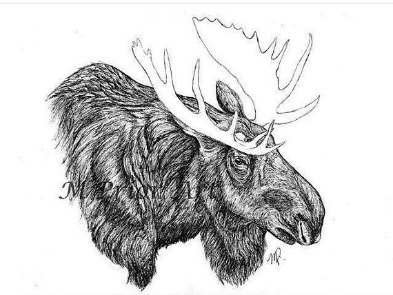 how to draw a realistic moose related keywords suggestions for moose pencil drawings moose how a realistic draw to