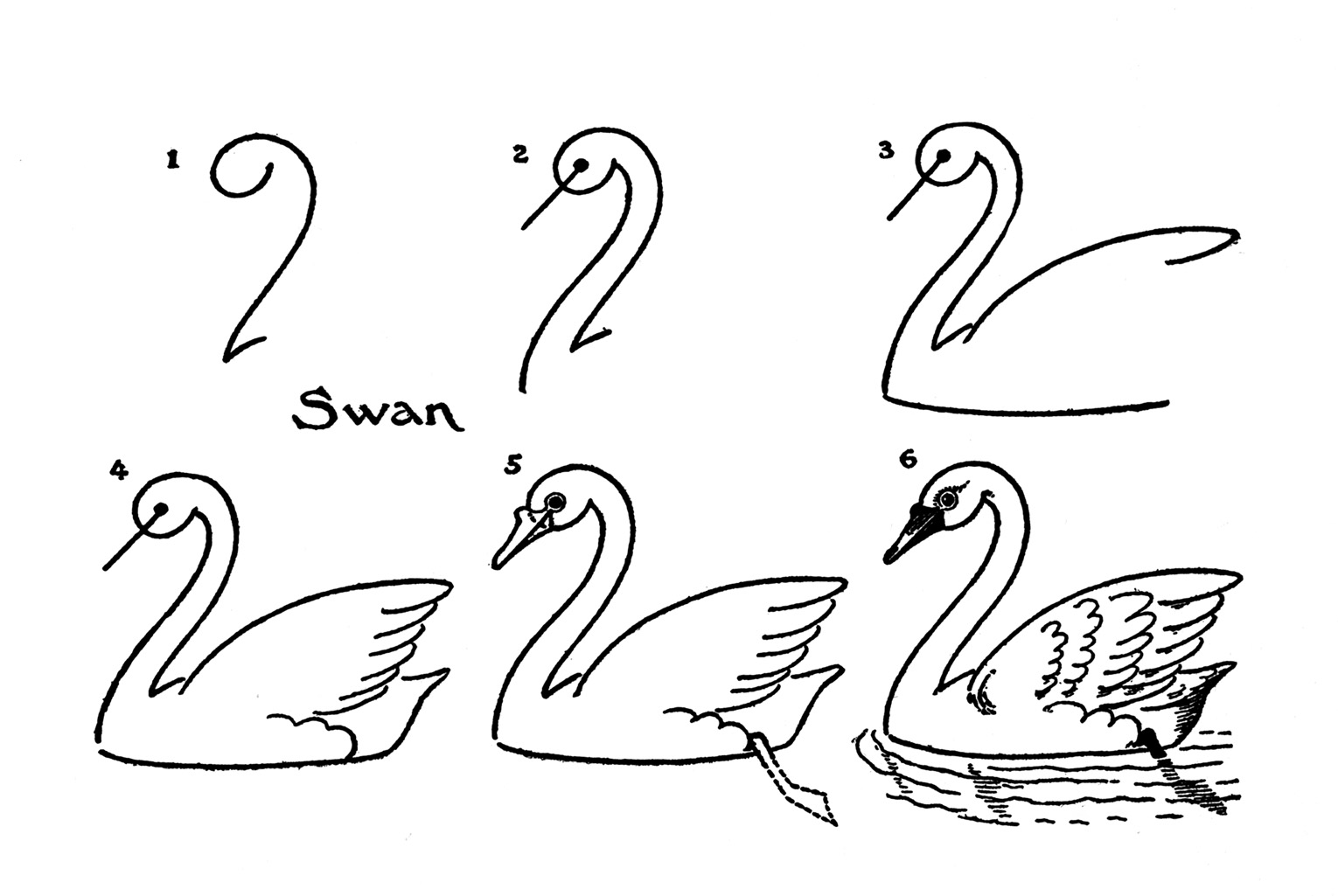how to draw a swan drawing swan swan a how draw to