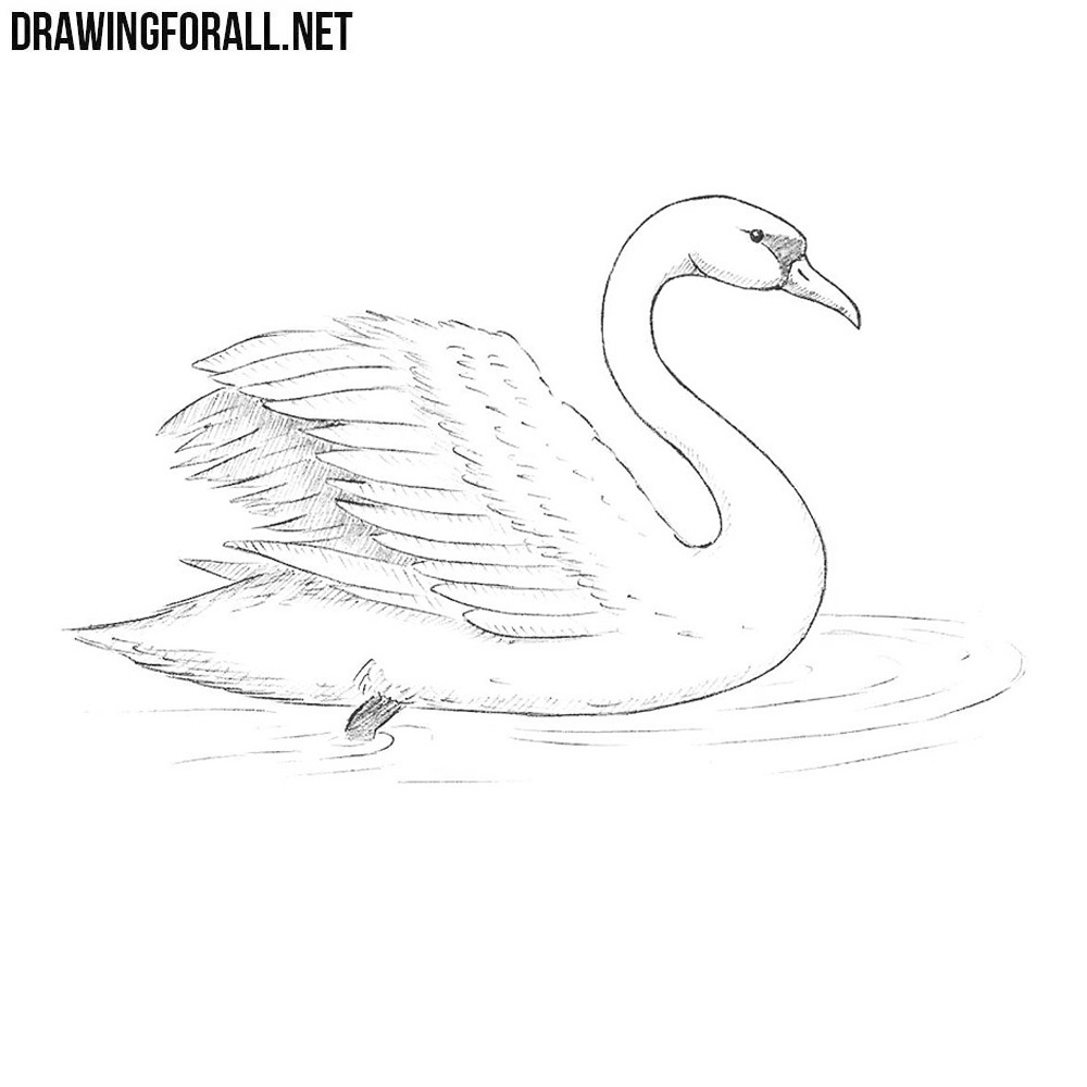 how to draw a swan how to draw a swan step by step drawing for beginners how a to draw swan
