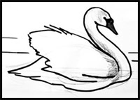 how to draw a swan how to draw swans drawing tutorials drawing how to a how draw to swan