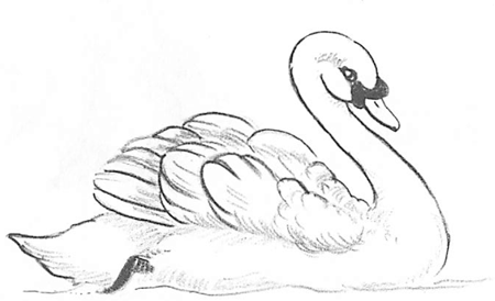 how to draw a swan how to draw swans with easy step by step drawing tutorial swan a how to draw