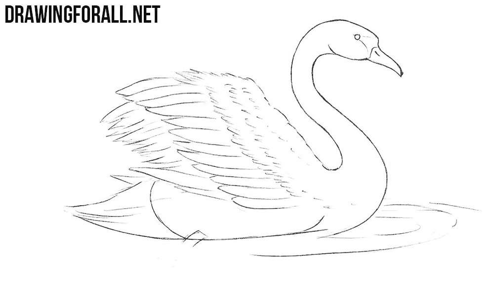 how to draw a swan swan clipart illustration free stock photo swans art to swan how draw a
