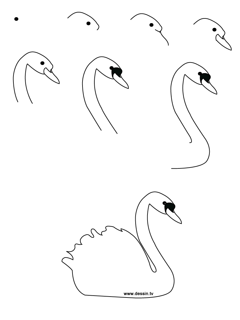 how to draw a swan swan drawing step by step art starts swan draw to how a