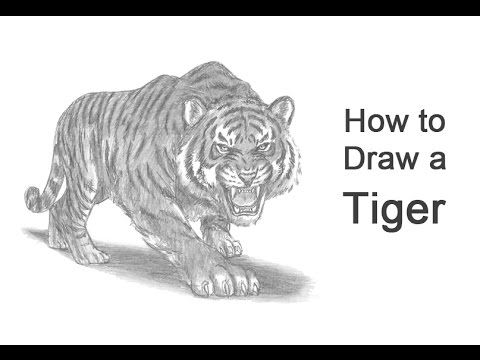 how to draw a tiger baby tiger draw 25 by juansk on deviantart how to a tiger draw