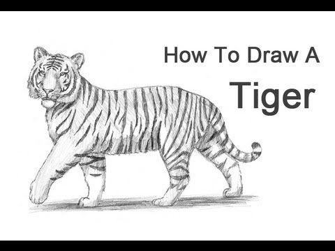 how to draw a tiger how to draw a tiger easy with a pencil for beginners how draw tiger a to