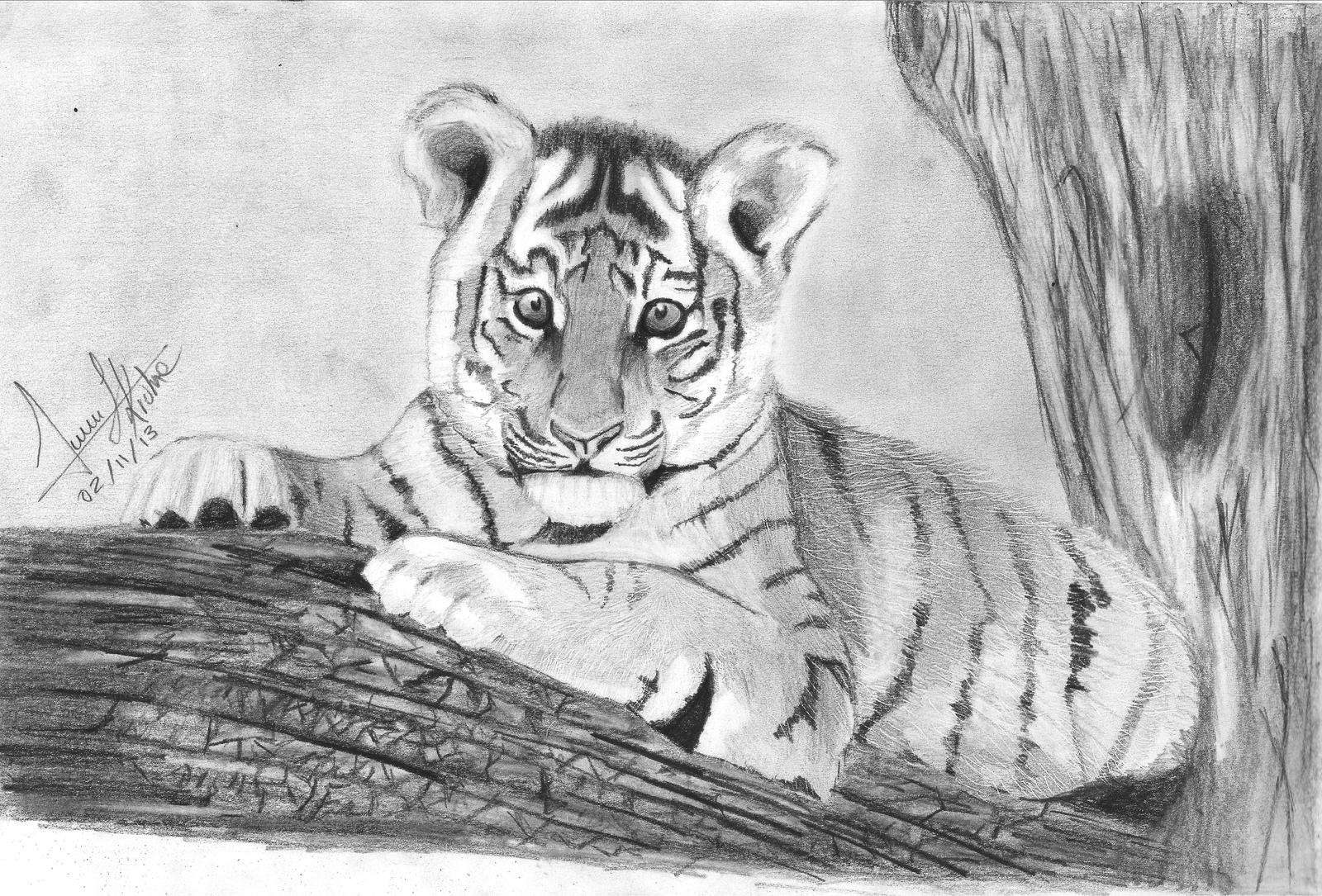 how to draw a tiger learn to draw a tiger cub step by step to how draw tiger a