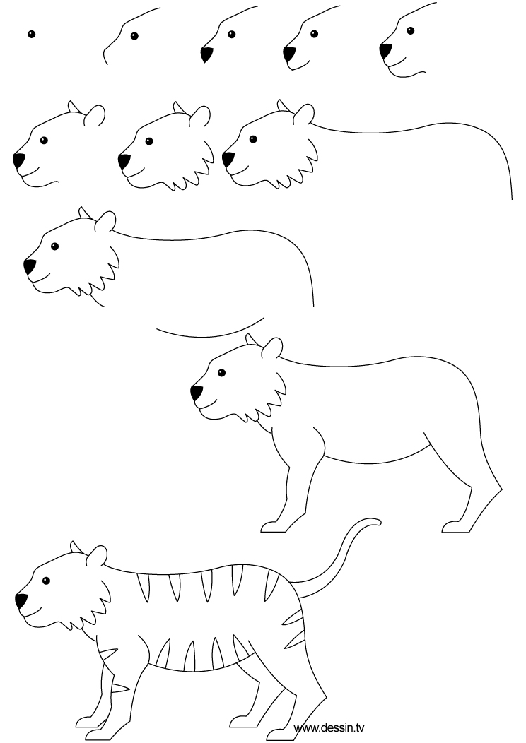 how to draw a tiger simple tiger drawing at paintingvalleycom explore a to tiger draw how