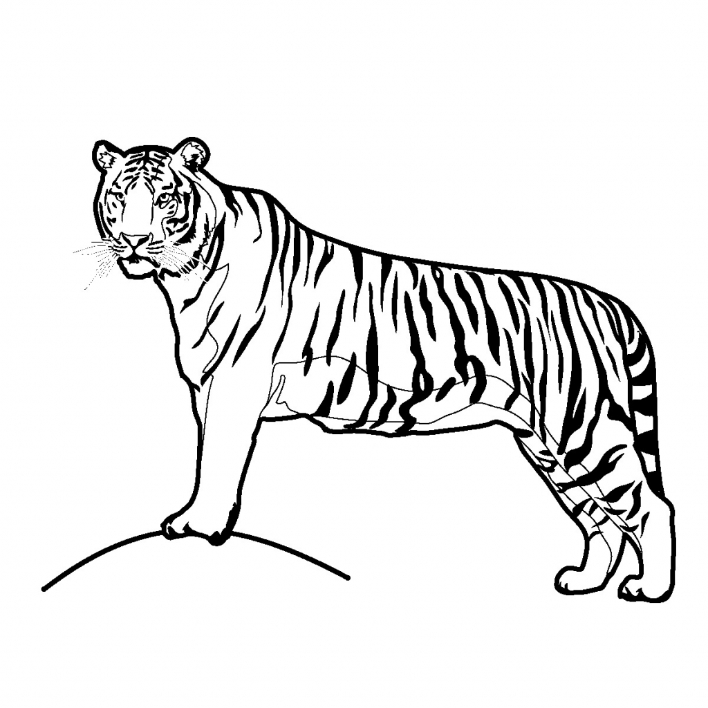 how to draw a tiger tiger head drawing easy at paintingvalleycom explore a how tiger to draw