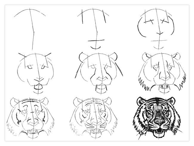 how to draw a tiger tiger pencil drawing at getdrawings free download how draw to tiger a
