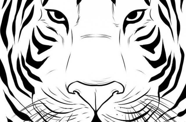 how to draw a tiger tiger sketch 1 by legend13 on deviantart tiger a to how draw