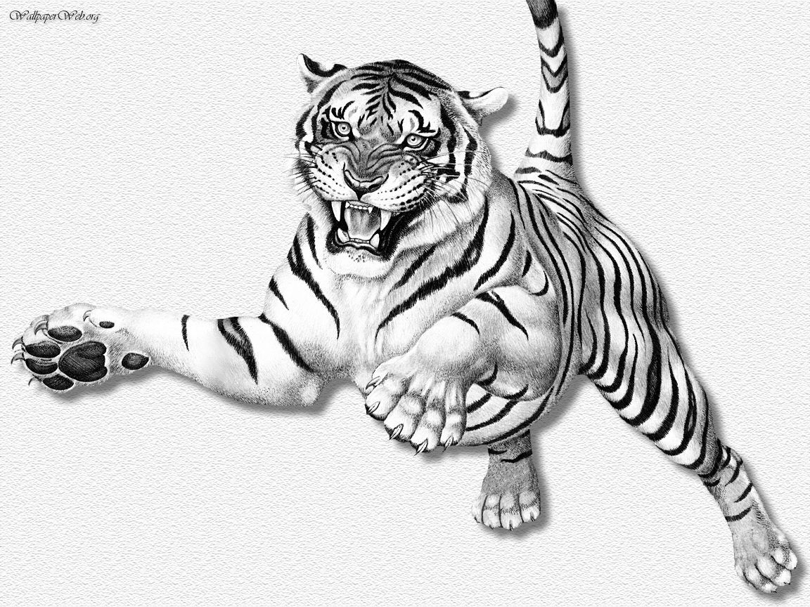 how to draw a tiger white tiger clipart easy draw a tiger sitting free draw to a tiger how