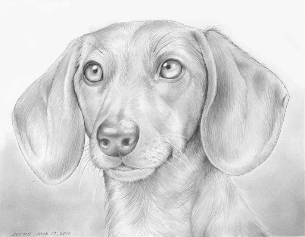 how to draw a wiener dog long haired dachshund drawing by deb gardner dog to a wiener draw how