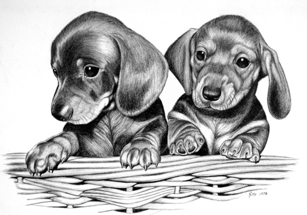 how to draw a wiener dog pencil dachshunds by dave the drawing guy all about to dog wiener a how draw