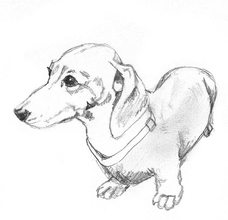 how to draw a wiener dog weenie dog drawing free download on clipartmag dog how wiener draw to a
