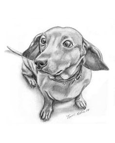 how to draw a wiener dog weinner dog drawing dachshund drawing dog drawing draw wiener to a how dog
