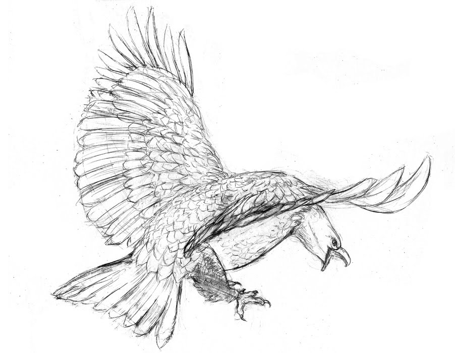how to draw an eagle flying bald eagle flying drawing at getdrawings free download flying an draw to eagle how