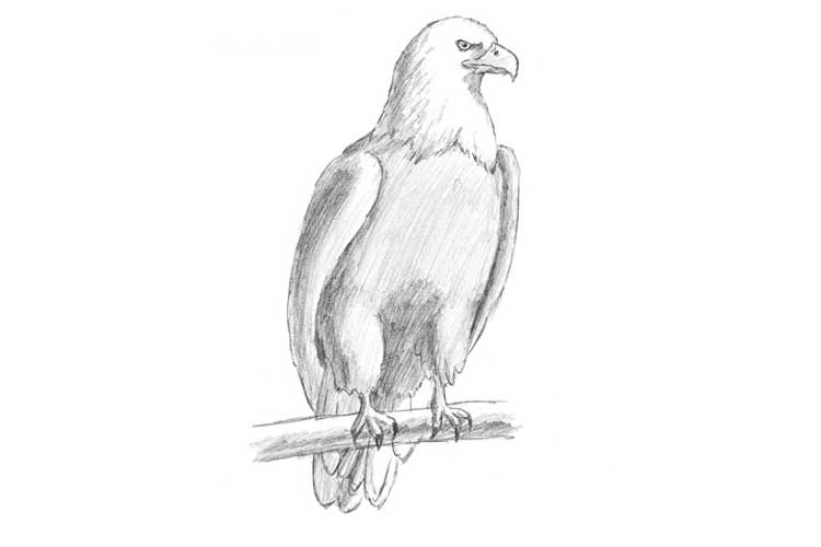 how to draw an eagle flying bald eagle flying drawing at getdrawings free download flying an eagle to draw how
