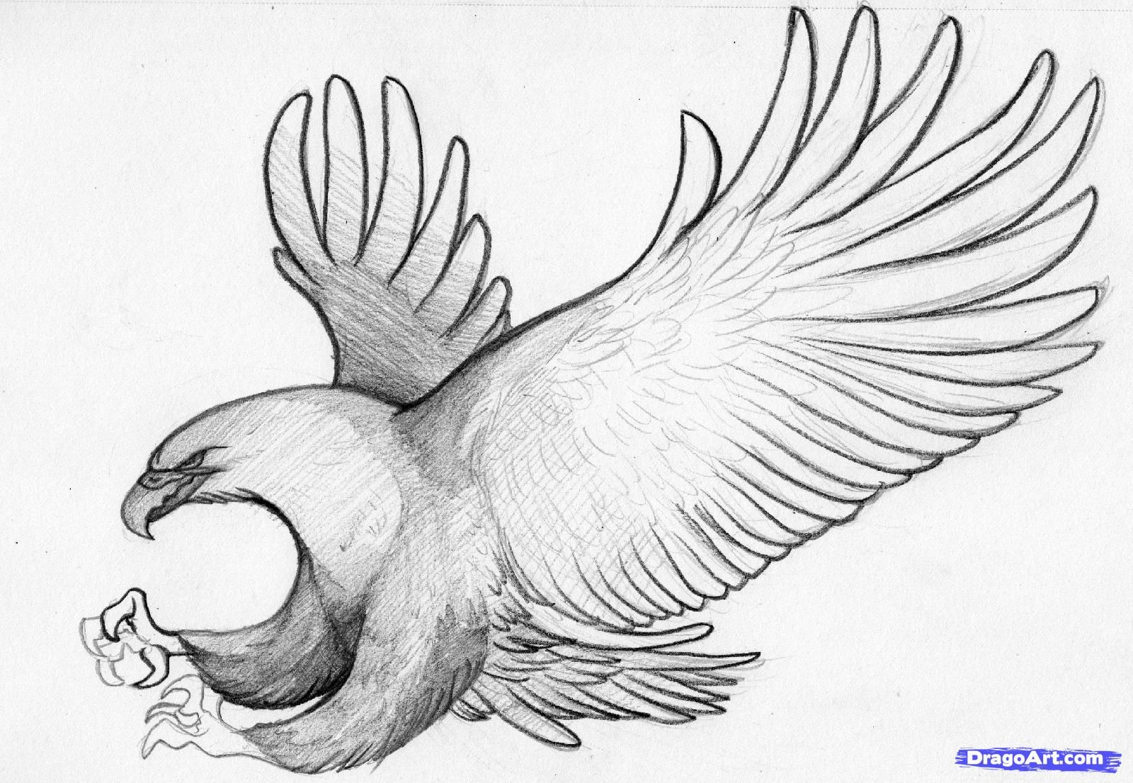 how to draw an eagle flying bald eagle flying drawing collection set by apatrimonio on eagle to an draw flying how
