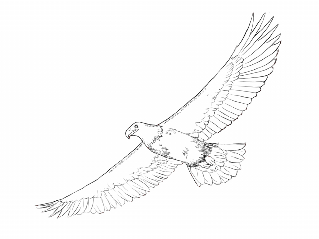 how to draw an eagle flying drawings bald eagle bald eagle flying hand draw sketch draw flying an eagle to how