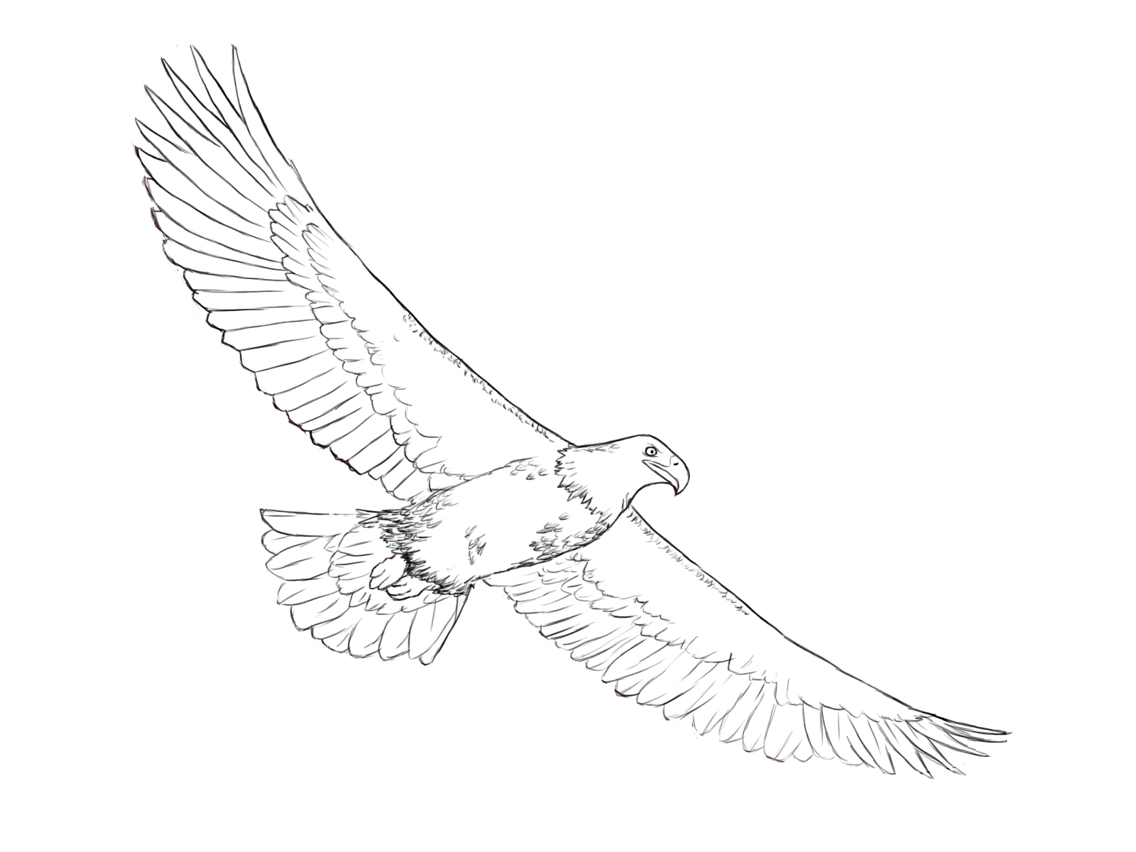how to draw an eagle flying eagle drawing and how to draw eagle draw a flying eagle an flying how eagle to draw