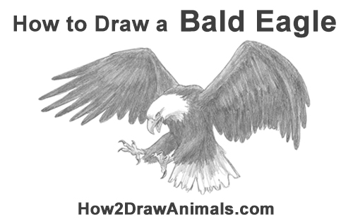 how to draw an eagle flying eagle flying sketch at paintingvalleycom explore how an flying eagle draw to