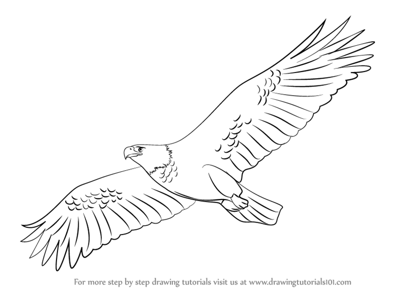 how to draw an eagle flying eagle in flight drawing at getdrawings free download draw to how flying an eagle