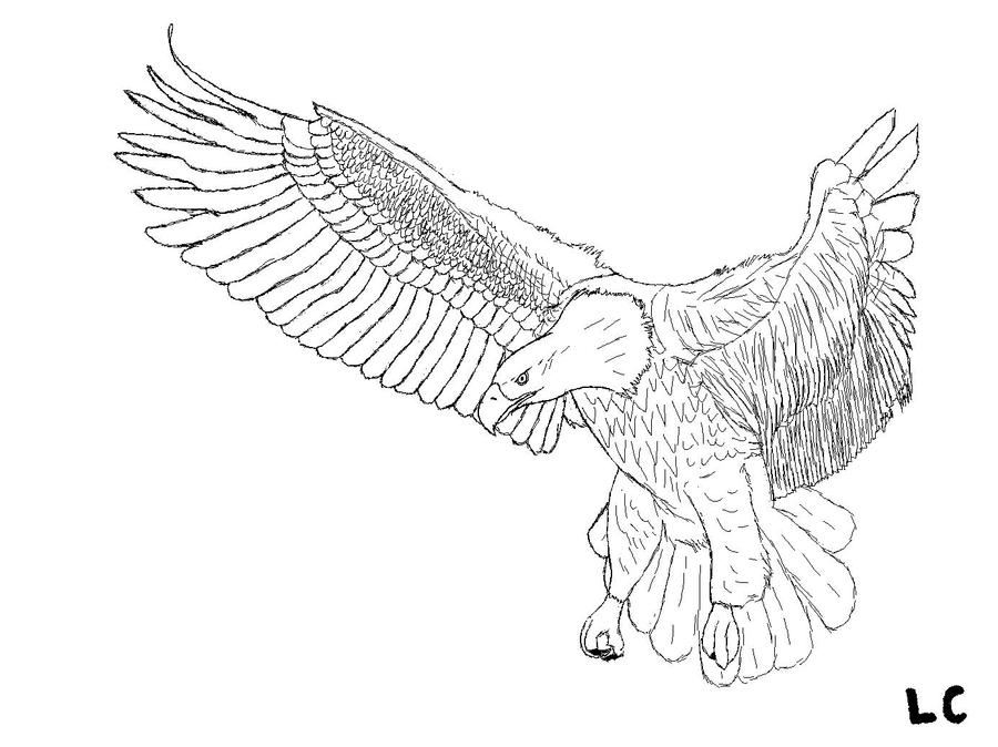 how to draw an eagle flying flying eagle drawing at getdrawings free download flying eagle an draw how to