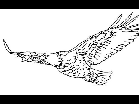 how to draw an eagle flying flying eagle drawing at getdrawings free download how flying an eagle to draw